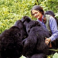 Happy 88th Birthday Dian Fossey