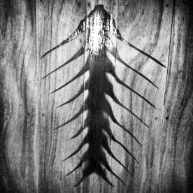 palm spine