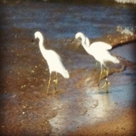 skinny white birds