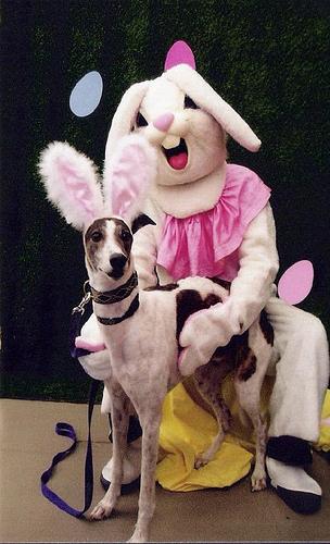 bunny 23