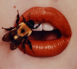 irving penn bee