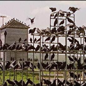 the birds 04