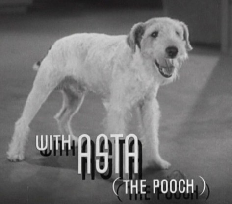 Asta_in_After_the_Thin_Man_trailer