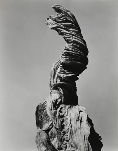 edward weston stump against sky